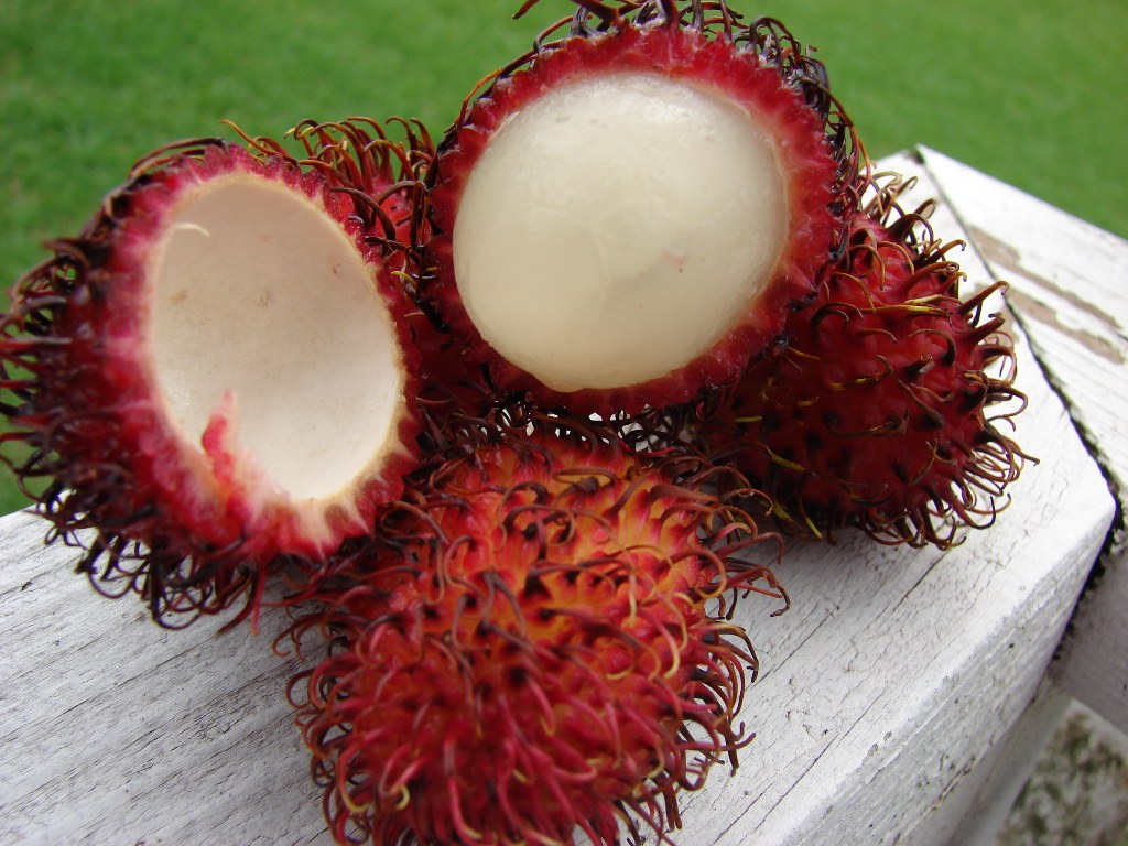 http://fruit-island.ru/images/upload/rambutan17.jpg